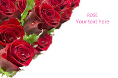Greeting card with a bouquet of roses Stock Photography