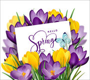 Greeting card with bouquet of spring flowers crocuses in the envelope.Vector Stock Photography