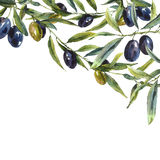 Greeting card with branches of olive tree Stock Images