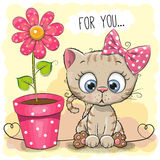 Greeting card Cat with flower. Greeting card kitten girl with flower on a blue background