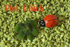 Greeting Card, Cloverleaf and ladybird Royalty Free Stock Photos