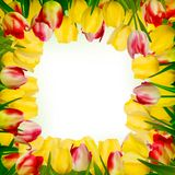 Greeting card with colorful flower. EPS 10 Stock Photography