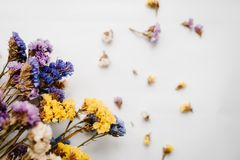 Greeting card. Composition dried colored flowers on a white background. Copy space. Romantic flowers. Place for text and design. Flat lay, top view. Bokeh Royalty Free Stock Photo