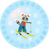 Greeting card with cute raccoon on skiing. Decorative plate.  Stock Photos
