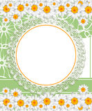 Greeting card with daisies and abstracts backgroun Stock Images
