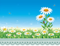 Greeting card with daisies Stock Photo