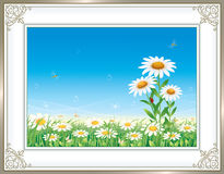 Greeting card with daisies Stock Image