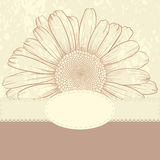 Greeting card with daisy. Royalty Free Stock Photo
