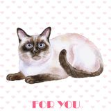 Greeting card design. Watercolor portrait of siamese black and white short hair cat isolated on hearts background Stock Photos