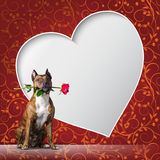 Greeting card with a dog with rous and frame in the shape of heart. Stock Images
