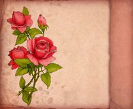 Greeting card with drawing of red rose Stock Photography