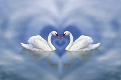 Greeting card from February 14 as an invitation to Valentine`s Day. A pair of swans in love framed by a cloudy heart against a royalty free stock photos