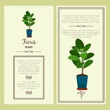 Greeting card with ficus plant. Greeting card with ficus decorative plant, square frame. Vector illustration Stock Photo