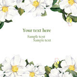 Greeting card with floral border - white flowers. Aquarelle Stock Photography