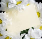 Greeting card and flowers Royalty Free Stock Images