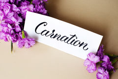 Greeting card with flowers and word Carnation on light wooden background Stock Photos
