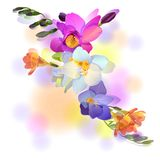 Greeting card with gentle freesia flowers. Vector greeting background with pictorial freesia flowers Royalty Free Stock Photography