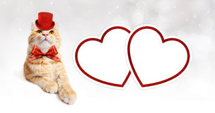 Greeting card with ginger cat and red hearts Royalty Free Stock Photos