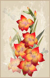 Greeting card with  gladiolus. Illustration gladiolus and dragonfly Royalty Free Stock Photography