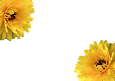 Greeting Card. Gretting Card with yellow Flowers Stock Image