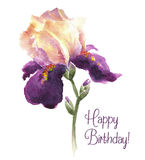 Greeting card Happy Birthday with watercolor iris. Greeting card Happy Birthday with iris flower. Watercolor vector illustration Stock Images