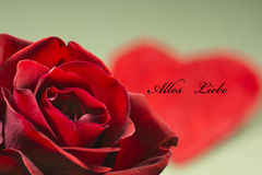Greeting card, heart and rose, valentine day, much love Royalty Free Stock Image