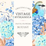 Greeting card with hydrangea Royalty Free Stock Image