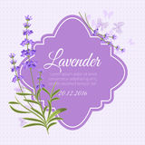 Greeting card, invitation vector template with fragrant lavender Royalty Free Stock Photography