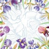 Greeting card with iris flowers Royalty Free Stock Photos