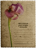 Greeting card with iris flower Royalty Free Stock Images