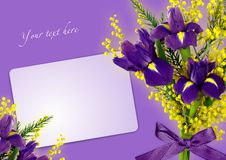 Greeting card with irises and Mimosas. Royalty Free Stock Photos