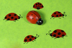 Greeting card with ladybirds Stock Image