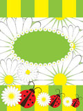 Greeting card with ladybirds and chamomile Stock Photos