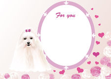 Greeting card with a lapdog Stock Photo