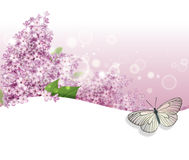 Greeting card with lilac and butterfly. Background Royalty Free Stock Images