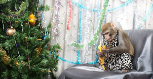 Greeting card with monkey, banana, new year tree, decorations Royalty Free Stock Image