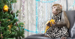 Greeting card with monkey, banana, new year tree, decorations Royalty Free Stock Images