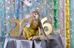 Greeting card with monkey, numbers, decorations Royalty Free Stock Image
