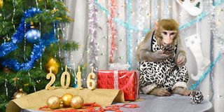 Greeting card with monkey, numbers, gift, decorations Stock Image