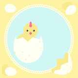 Greeting card with new born chicken Stock Image