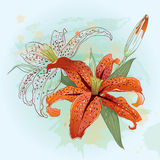 Greeting card with orange  lilies Royalty Free Stock Photos