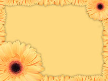 Greeting card with orange-yellow transvaal daisy flower. Beautiful greeting card with orange transvaal daisy on a yellow background royalty free stock images