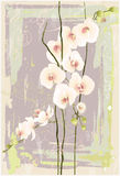Greeting card with orchid. Illustration orhid. Royalty Free Stock Images