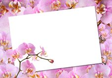 Greeting Card With Orchids Royalty Free Stock Photo