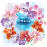 Greeting card with orchids flowers Stock Photo