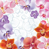 Greeting card with orchids flowers Stock Image