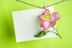 Greeting card with pink Alstroemeria Royalty Free Stock Photo