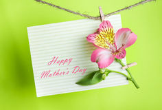 Greeting card with pink Alstroemeria Stock Photos