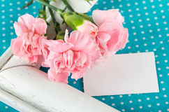 Greeting card with pink carnations on a bright blue background w Royalty Free Stock Photo
