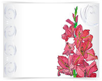 Greeting card with pink flower and ornament. Pink gladiolus flowers with decorative ornament Royalty Free Stock Photo